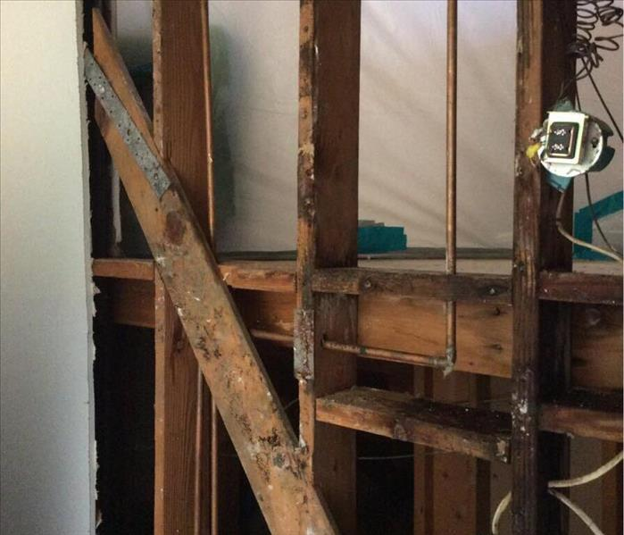 mold remediation in drywall near me downey