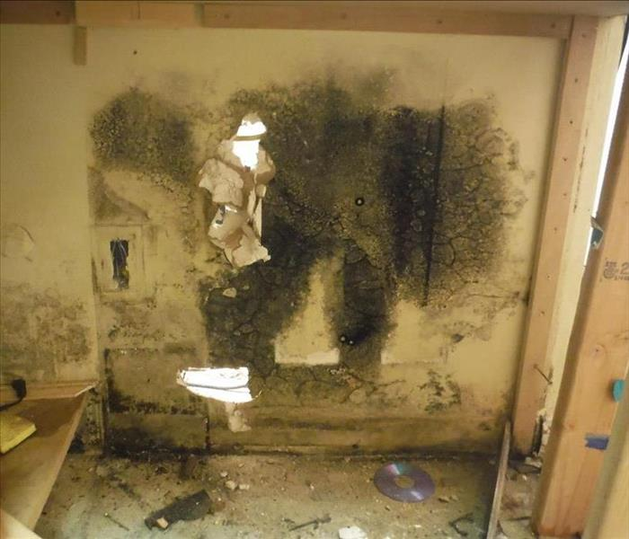 commercial office mold near me downey