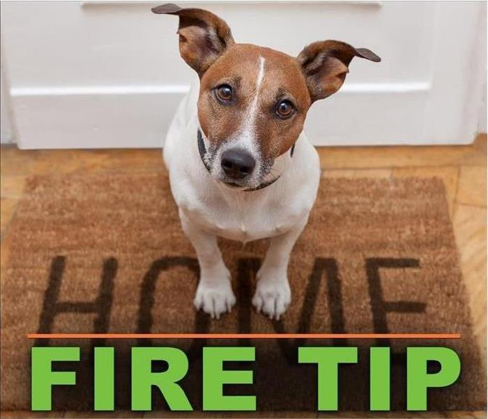 fire damage restoration near me pet safety